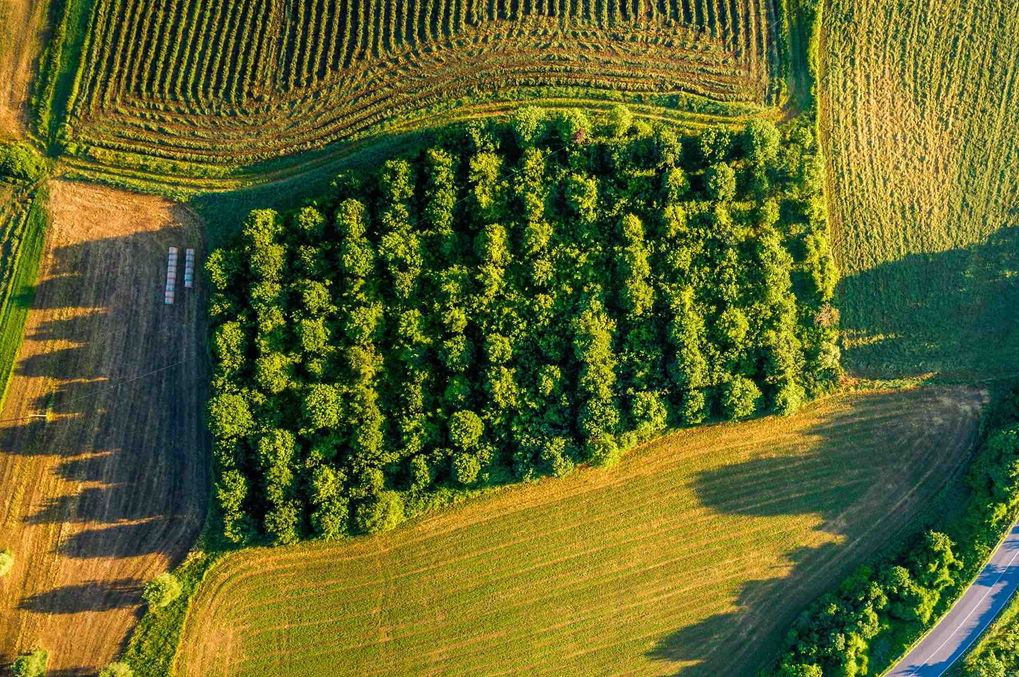 The Benefits of Investing in Farmland