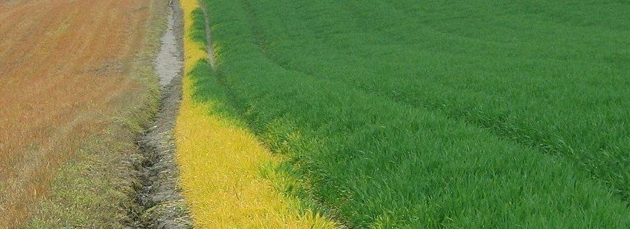 Making Sense of Regenerative Agriculture
